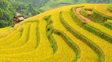 Vietnam pas cher