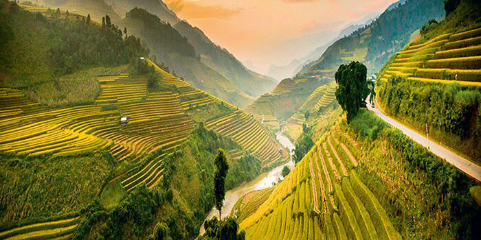 riziere vietnam cambodge