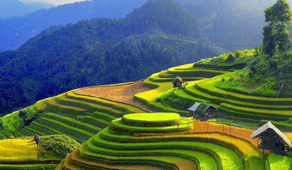 Rizières en terrasse à Sapa Vietnam